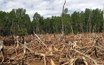 Causas y consecuencias de la deforestación 7