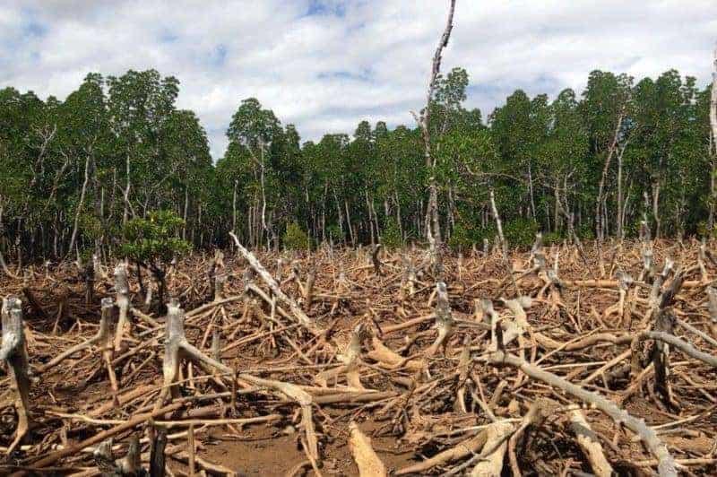 Causas y consecuencias de la deforestación 1