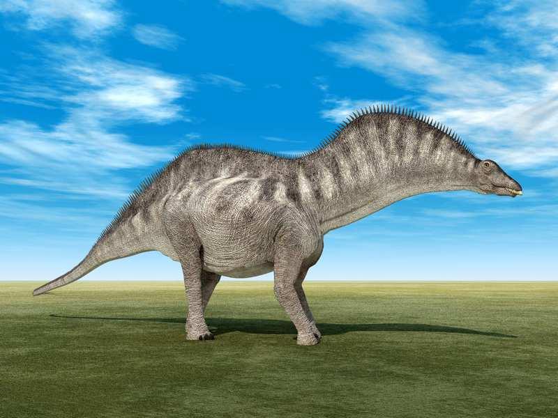 La mayoría de los dinosaurios extraños - Amargasaurus