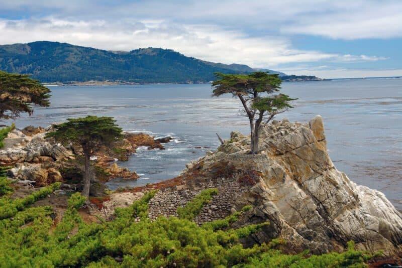 Los árboles más famosos del mundo: Lone Cypress