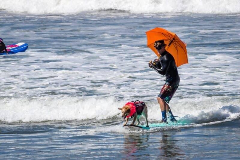 La mayoría de las ciudades que aceptan mascotas - San Diego CA.