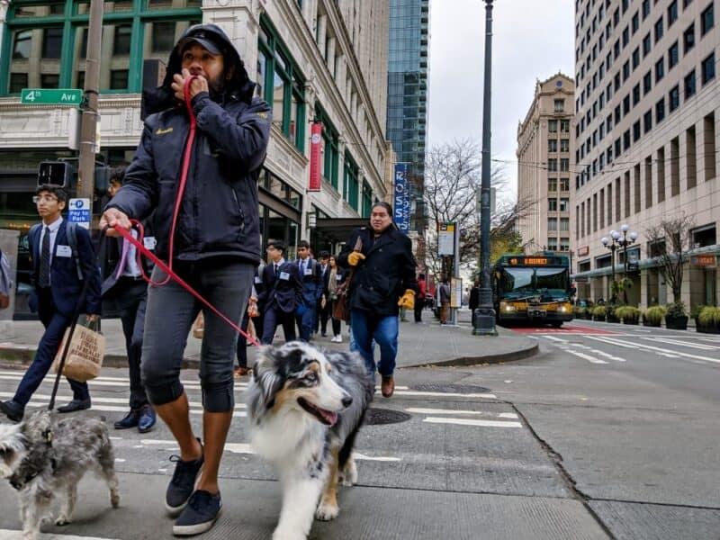Ciudades con más mascotas - Seattle WA