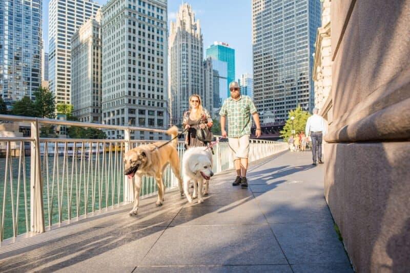 Las ciudades que más admiten mascotas en 2020 1