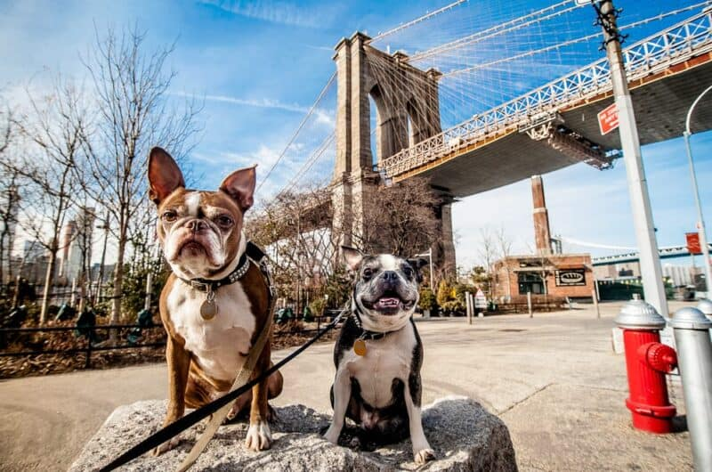 Ciudades con la mayoría de las mascotas - Nueva York NY
