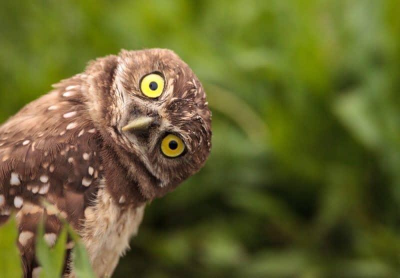 Los 10 animales con audición más extrema del mundo 1