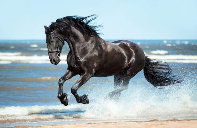 Los animales con audición más extrema - caballo
