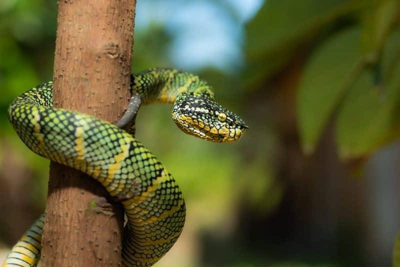 Las serpientes más venenosas - víbora