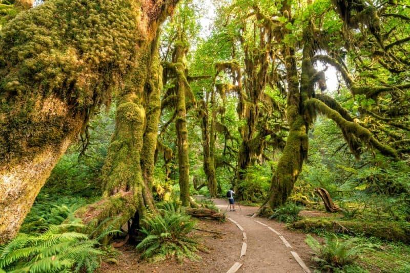Los lugares más tranquilos - Parque Nacional Olympic