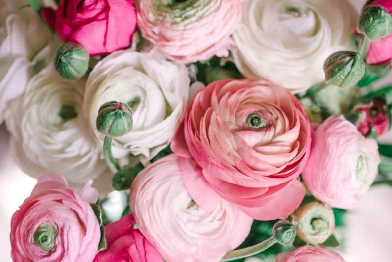 Flores de boda más populares - ranunculus