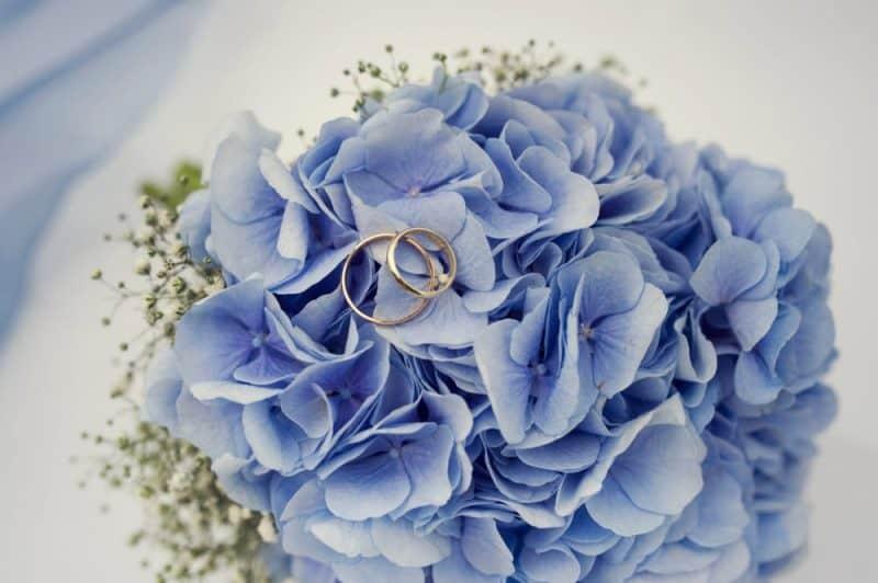 Flores de boda más populares: hortensias