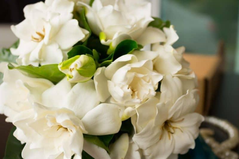 Flores de boda más populares - gardenia