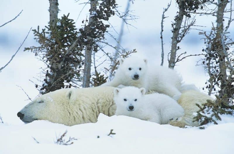 Los lugares más fríos de la tierra - Snag