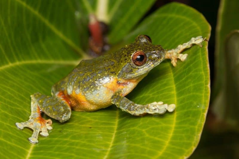 Animales que pueden vivir sin comida: ranas