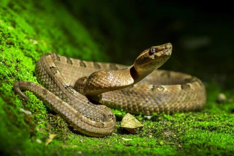 Animales que pueden vivir sin comida: serpientes