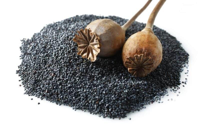 Las semillas más nutritivas - semillas de amapola