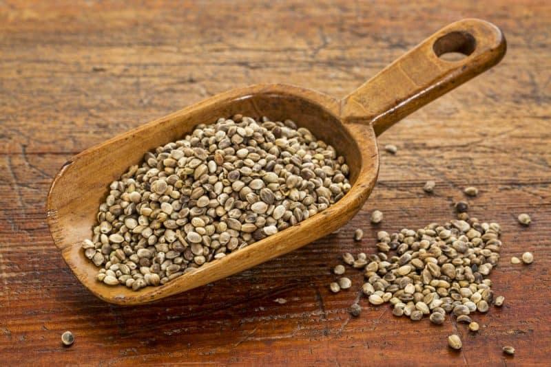 Las semillas más nutritivas: semillas de cáñamo
