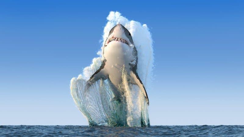 10 animales marinos más peligrosos 1