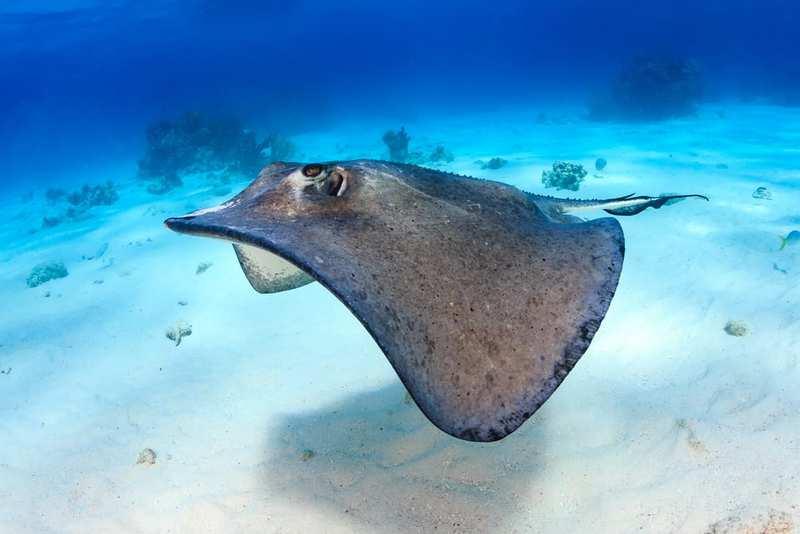 Los animales marinos más peligrosos