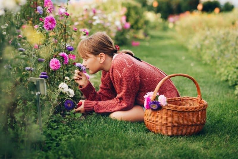 10 flores más fragantes para tu jardín 1