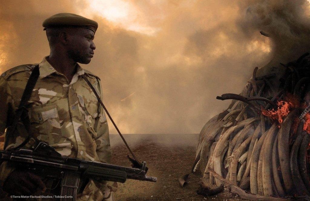 12 mejores documentales de naturaleza en Netflix (2019, 2020) 9